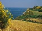Il monte San Bartolo in fiore